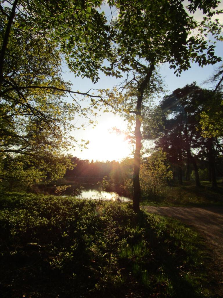 avondwandeling - stilte stappen - zinstap