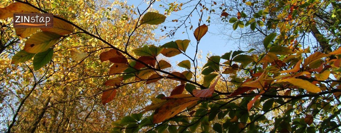 Pelgrimeren in de Herfst